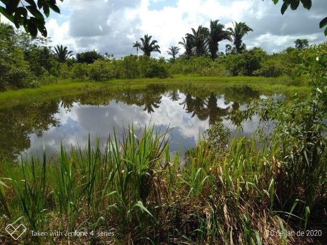 Fazenda no km 42, rumo Humaitá, com 100.00ha - Foto 8