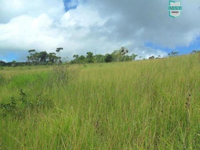 Fazenda Itamaraty com 300 Hectares, potencial para 300 gados, 70 hectares de cacau - Foto 16