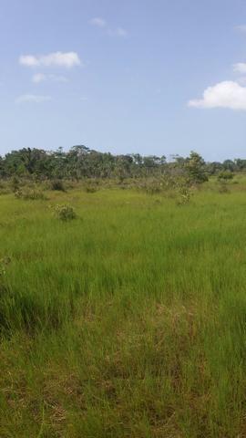 Fazenda 1.270hectares 110km Belém PA documentado - Foto 2