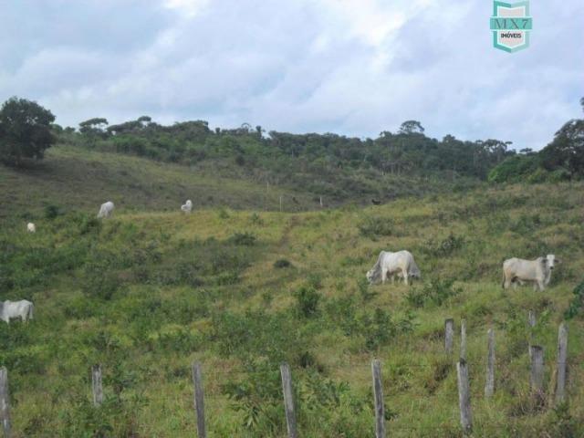 Fazenda Itamaraty com 300 Hectares, potencial para 300 gados, 70 hectares de cacau - Foto 10