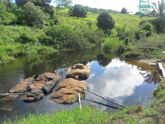 Fazenda Itamaraty com 300 Hectares, potencial para 300 gados, 70 hectares de cacau - Foto 13