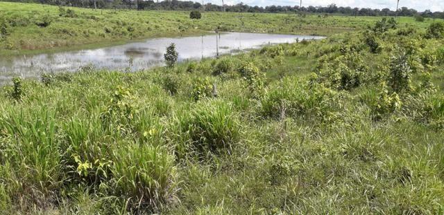 Fazenda em Roraima top - Foto 10