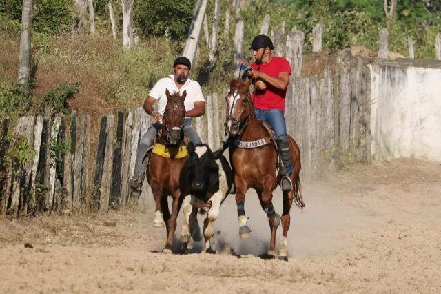 Cavalo de direita, baixei prá vender - Foto 5