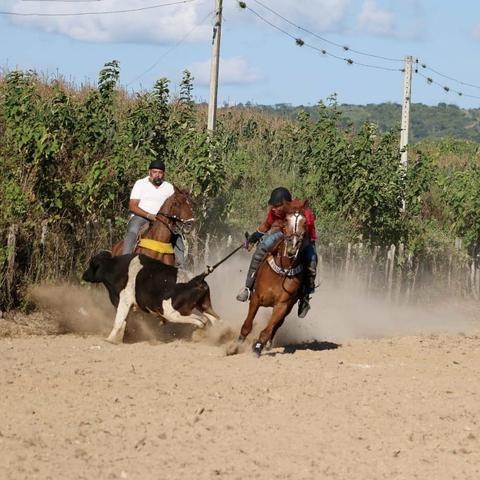 Cavalo de direita, baixei prá vender - Foto 6