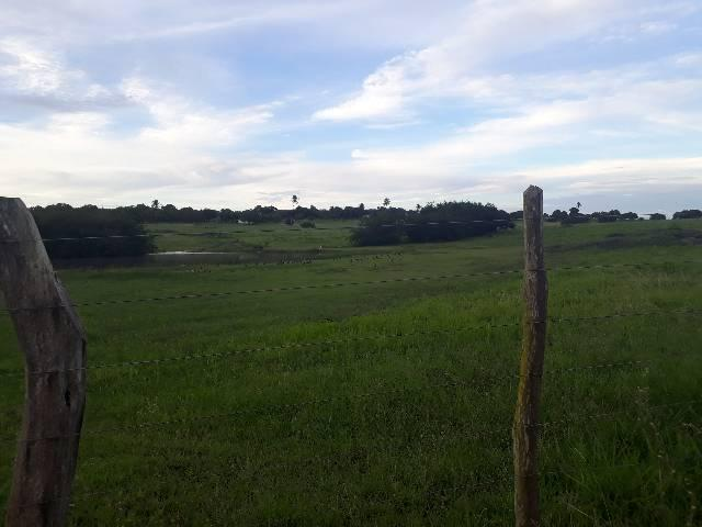 Fazenda com 50 hectares  estruturada na região de Monte Alegre   - Foto 5