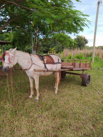 Carroça completa, com cavalo e arreios. - Foto 6