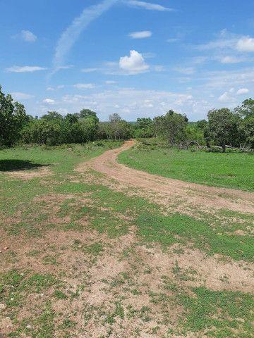 Fazenda Pitomba - 632 Hectares - Conceição do Tocantins - F210210 - Foto 8