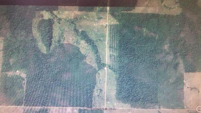 Reflorestamento teka e Manejo Florestal
