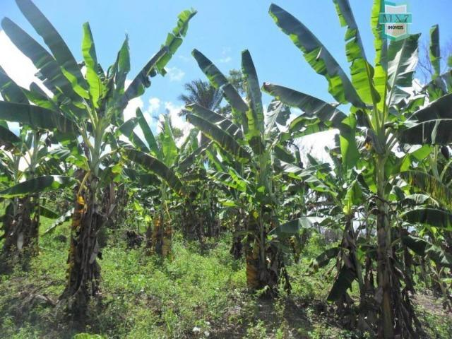 Fazenda Itamaraty com 300 Hectares, potencial para 300 gados, 70 hectares de cacau - Foto 20