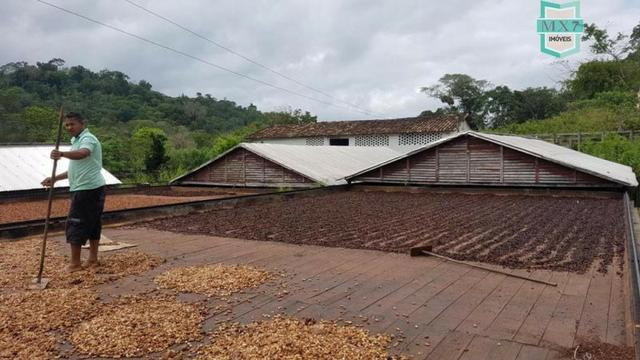 Ubaitaba. Fazenda de 450 Hectares, produção de cacau e gado, completa infraestrutura. - Foto 5