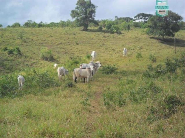 Fazenda Itamaraty com 300 Hectares, potencial para 300 gados, 70 hectares de cacau - Foto 11