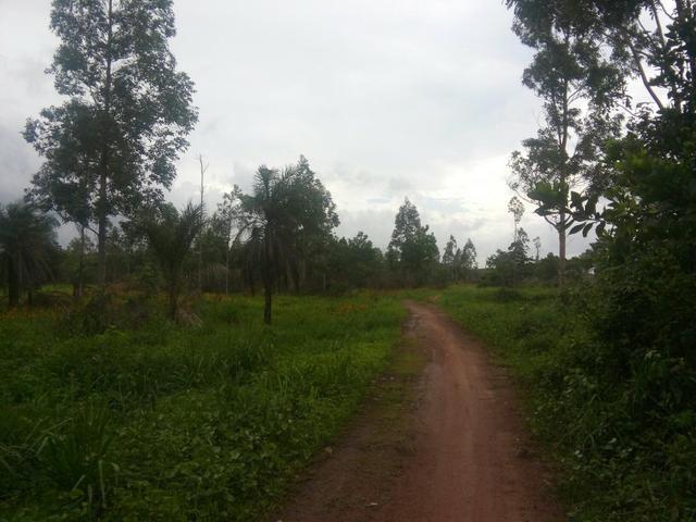 Fazenda 1.270hectares 110km Belém PA documentado - Foto 3