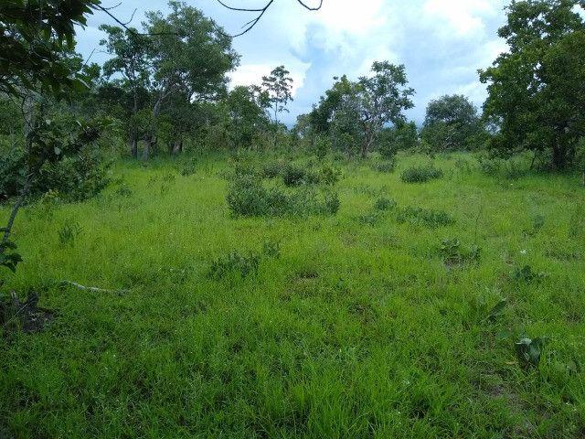 Fazenda Pitomba - 632 Hectares - Conceição do Tocantins - F210210 - Foto 5