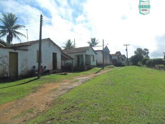Fazenda Itamaraty com 300 Hectares, potencial para 300 gados, 70 hectares de cacau - Foto 3