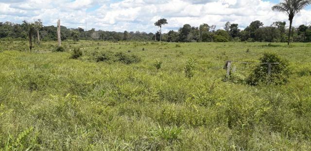 Fazenda em Roraima top - Foto 3