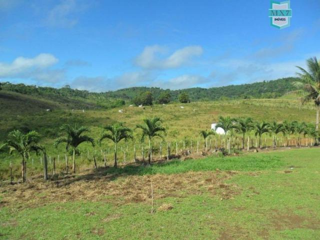 Fazenda Itamaraty com 300 Hectares, potencial para 300 gados, 70 hectares de cacau - Foto 7
