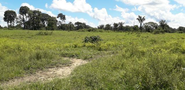 Fazenda em Roraima top - Foto 4