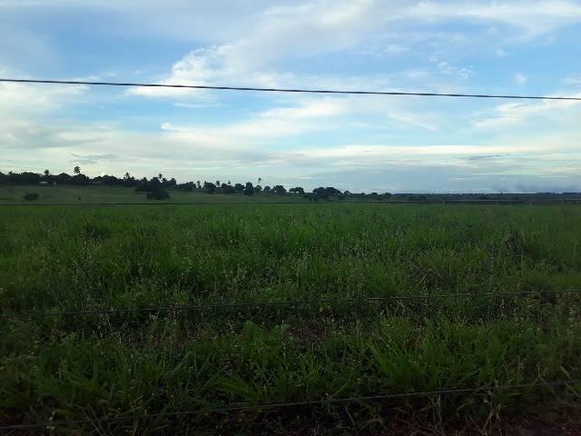 Fazenda com 50 hectares  estruturada na região de Monte Alegre   - Foto 6