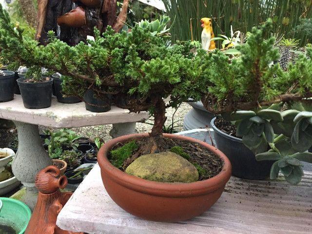 Floricultura Garden em Pelotas - Foto 3