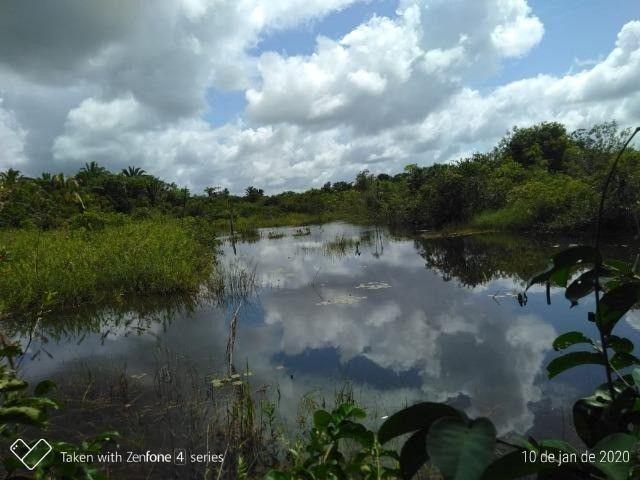 Fazenda no km 42, rumo Humaitá, com 100.00ha - Foto 3