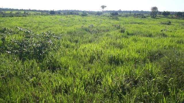fazenda top de linha com escritura -roraima caroebe