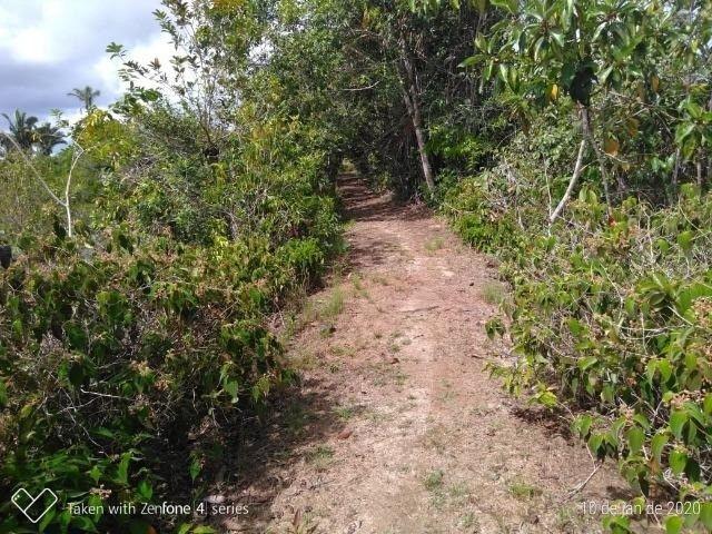 Fazenda no km 42, rumo Humaitá, com 100.00ha - Foto 9