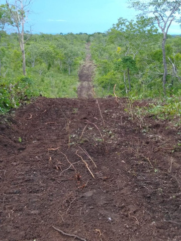 Fazenda Pitomba - 632 Hectares - Conceição do Tocantins - F210210 - Foto 4