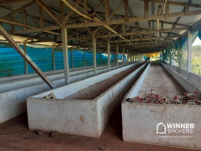 Sítio à venda, 242000 m² por R$ 3.500.000,00 - Rural - Mandaguaçu/PR - Foto 6