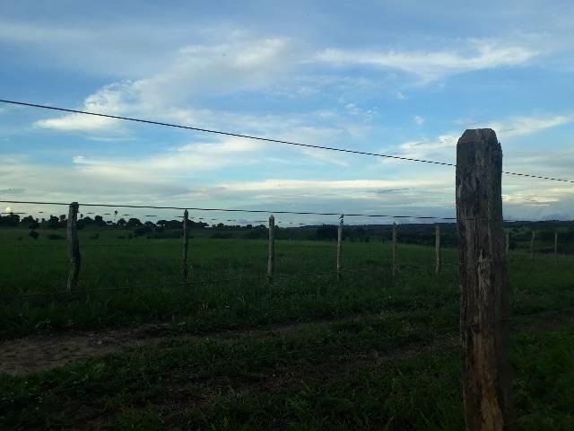 Fazenda com 50 hectares  estruturada na região de Monte Alegre   - Foto 3