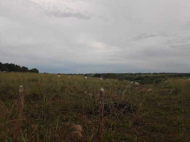 Fazenda com 50 hectares  estruturada na região de Monte Alegre   - Foto 7