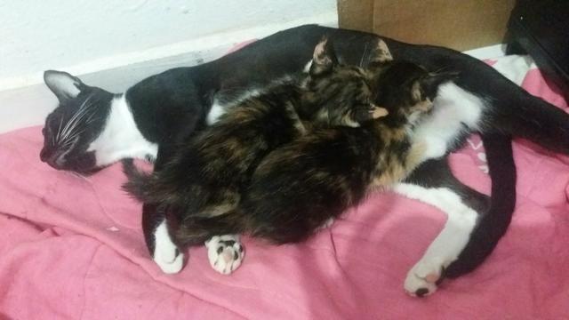 Estou doando dois gatos filhotes, 1 mês de nascidos