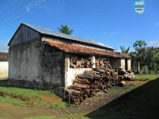 Fazenda Itamaraty com 300 Hectares, potencial para 300 gados, 70 hectares de cacau - Foto 5