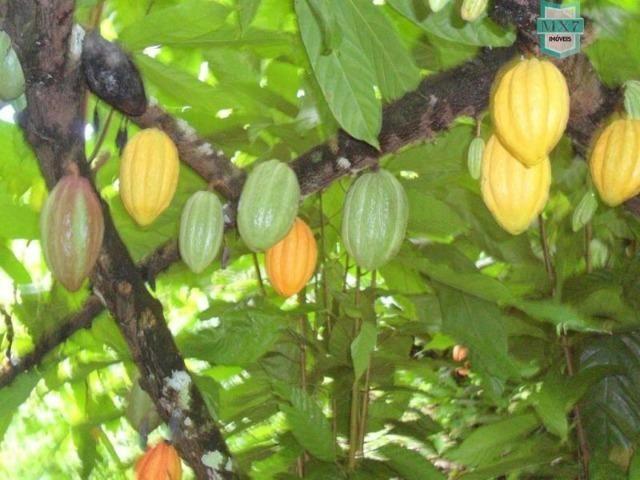 Fazenda Itamaraty com 300 Hectares, potencial para 300 gados, 70 hectares de cacau - Foto 19