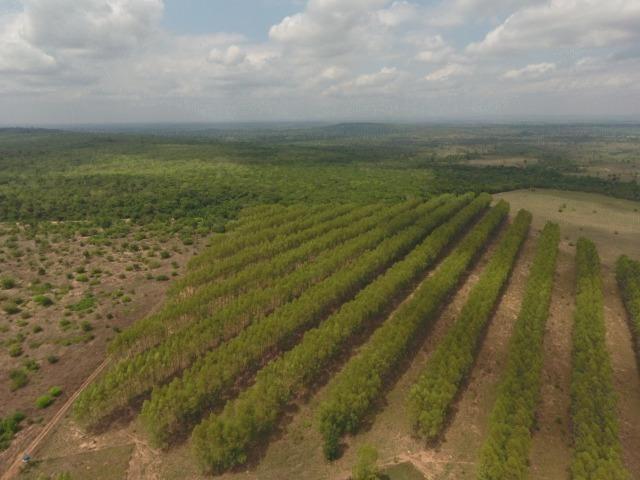 Fazenda 5.900 há (1.219 alq) pronta para produção Bovina norte do Tocantins - Foto 2