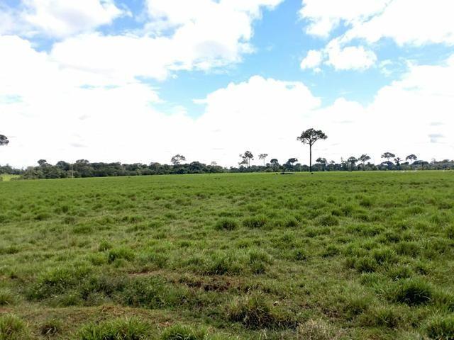 Área Rural (61 hectares) - Foto 6