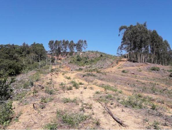 Sítio Localizado na Estrada Geral, Alto Braço Baú, 45 mil m² - Foto 12