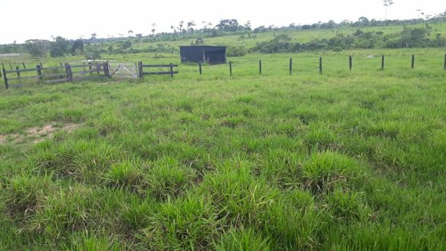 Fazenda no Acre