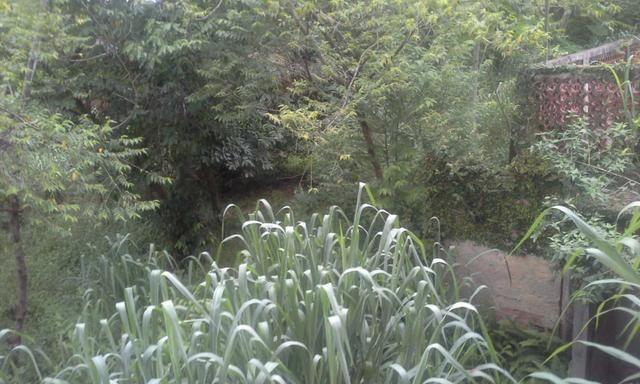 Vendo Terreno 12x30 em Itaboraí - aceito proposta - Foto 17
