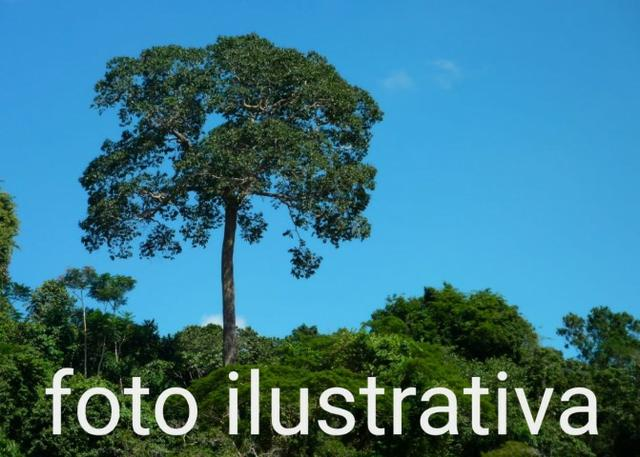 Fazenda com 69.000 hectares no amazonas, ler descrição do anuncio