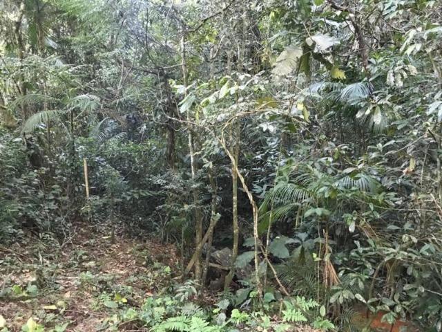 Sítio em Paraty a 8 km de Trindade- 10.000 m2 - Foto 6