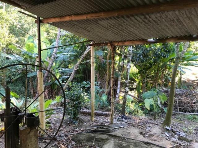 Sítio em Paraty a 8 km de Trindade- 10.000 m2 - Foto 13