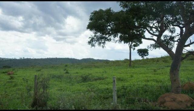 Fazenda 225 km de Goiânia município de Ipameri - Foto 2