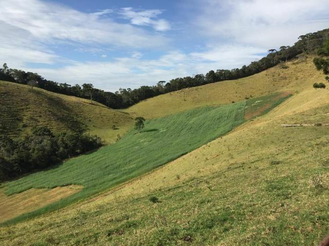 Excelente Fazenda 1km do centro de Delfim Moreira