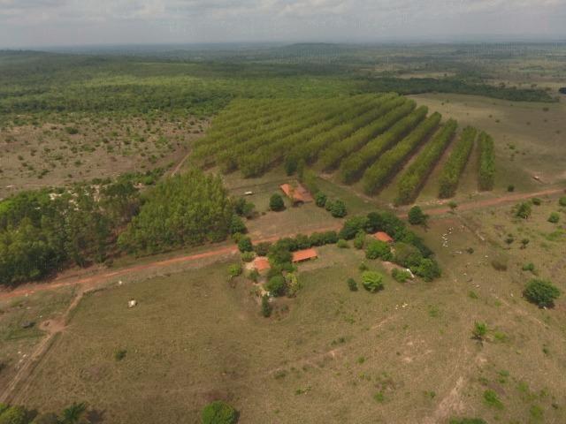 Fazenda 5.900 há (1.219 alq) pronta para produção Bovina norte do Tocantins - Foto 19