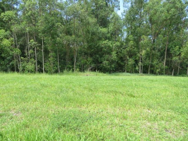 Terreno ninho verde, com fundo para área verde, 450 m², Imobiliária Paletó - Foto 4