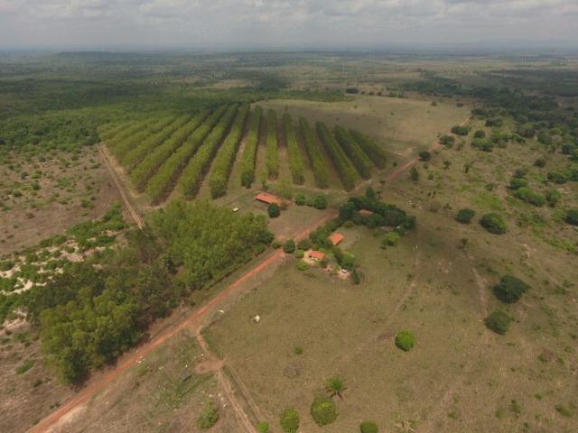 Fazenda 5.900 há (1.219 alq) pronta para produção Bovina norte do Tocantins - Foto 5