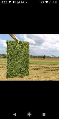 Plantamos grama  - Foto 4