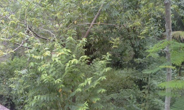 Vendo Terreno 12x30 em Itaboraí - aceito proposta - Foto 4