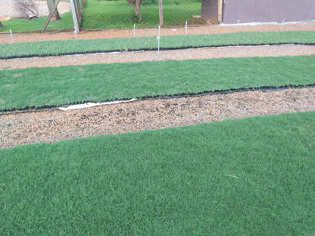 Plantamos grama