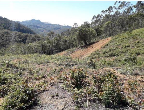 Sítio Localizado na Estrada Geral, Alto Braço Baú, 45 mil m² - Foto 10